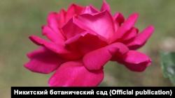 В Никитском ботсаду открывается выставка роз (+фото)