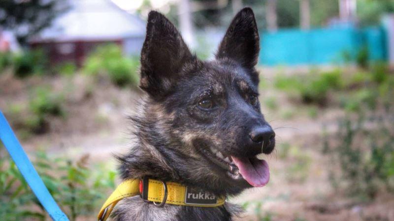 Захваченный моряк Гриценко обрадовался передаче собаки Джесси на материковую Украину – адвокат