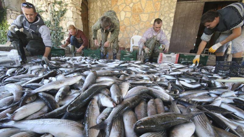 Роспотребнадзор выявил нарушения в половине проверенных точек продажи рыбы в Крыму