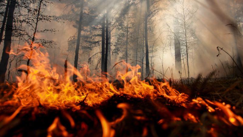Ночью возле ялтинского леса разгорелся пожар – спасатели