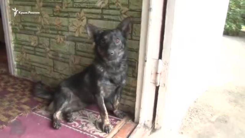 Собака Джесси встретилась с освобожденным моряком (видео)