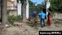 В центре Севастополя начали пилить деревья софоры (+фото)