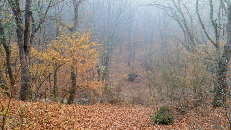 В тумане по лесам, горам и рекам Байдарской долины (фотогалерея)