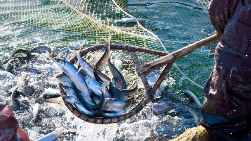 Украина согласовала с Россией квоты на вылов рыбы в Азовском море – Госрыбагентство