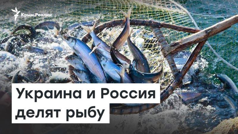 Украина и Россия делят рыбу в Азове – Доброе утро, Крым