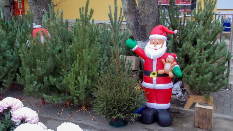 На следующей неделе в Симферополе откроются елочные базары – власти
