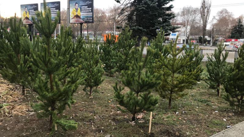 В Симферополе начали продавать новогодние елки (+фото)