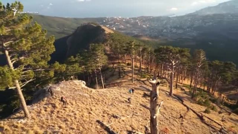 В заповедном лесу крымского Уч-Коша (видео)