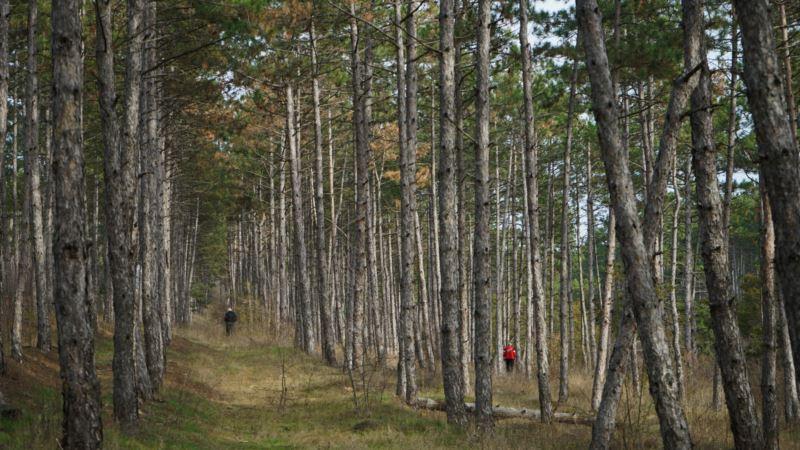 В Севастополе усилили патрулирование лесов перед Новым годом