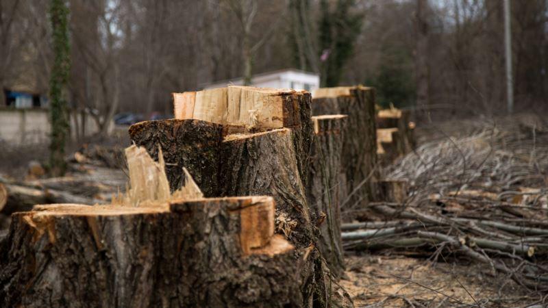 Аксенов поручил Гоцанюку контролировать решения по вырубке зеленых насаждений в Крыму