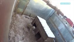 В Симферополе рассказали о строительстве приюта для животных