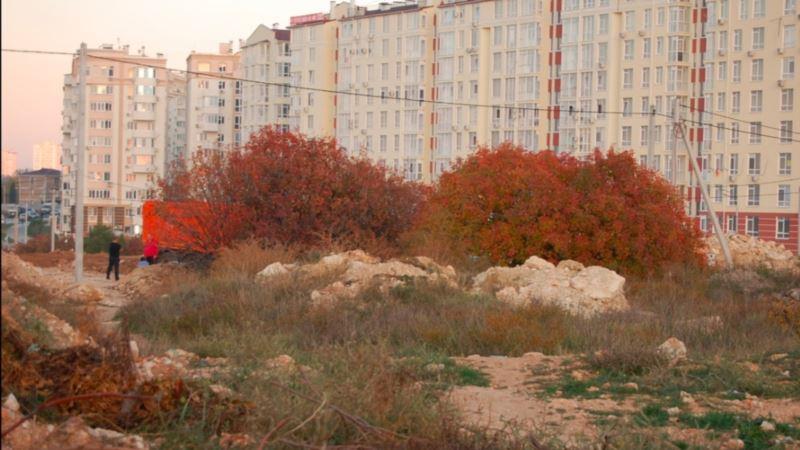 Дело о застройке фисташковой рощи в Севастополе: суд продолжается по требованию застройщика
