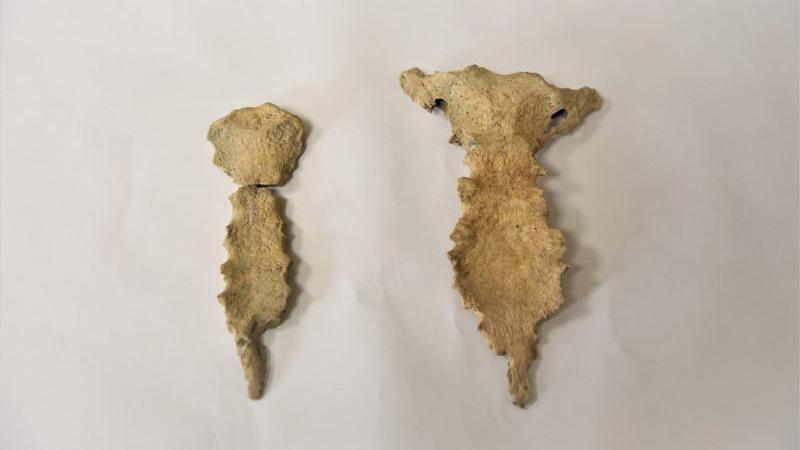 Археологи обнаружили в Севастополе человеческие останки с признаками болезни