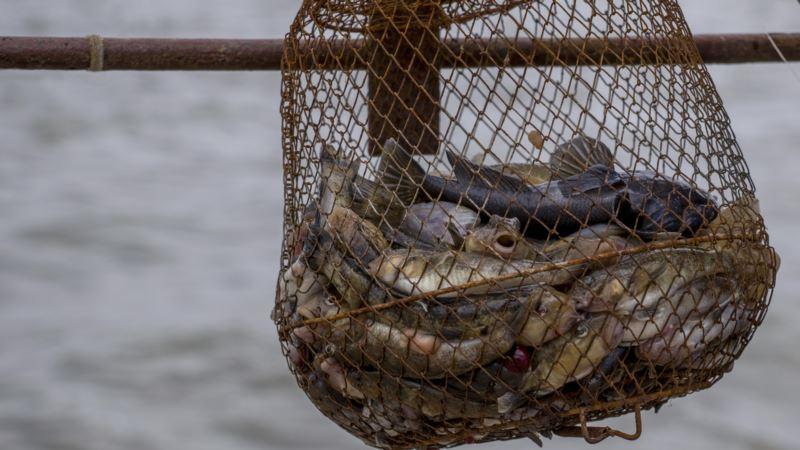 В Черном море до середины июня запрещают ловить бычков – Росрыболовство