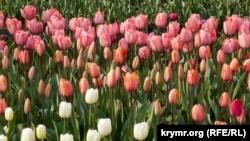 В Никитском ботсаду выберут «генерала» тюльпанов