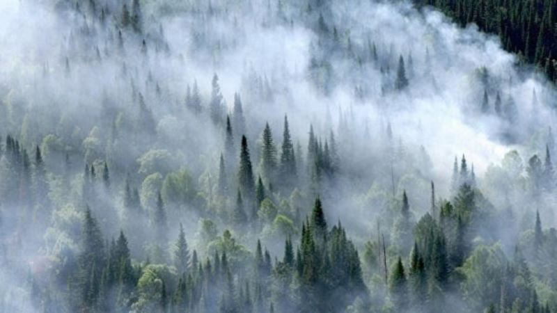 Россия: в Иркутской области местных чиновников поймали за поджогом леса