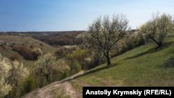 Крымские спасатели предупреждают о цветении вызывающего ожоги растения