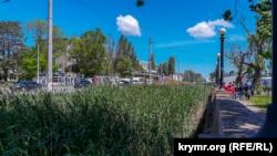 В центре Керчи речка Мелек-Чесме полностью заросла камышом (+фото)