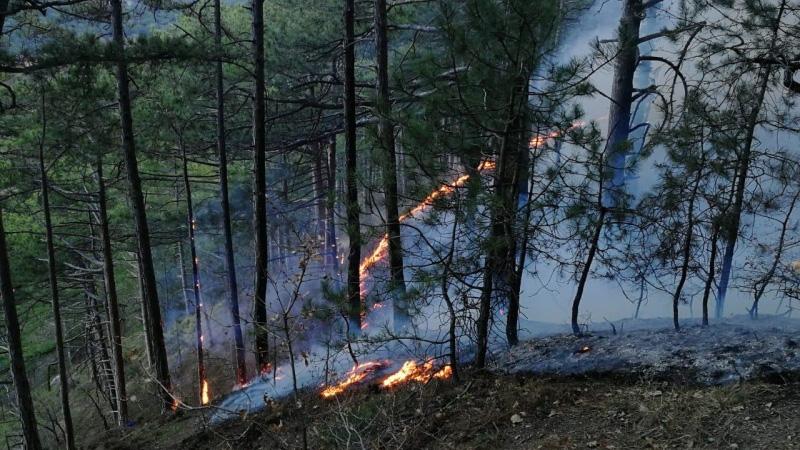 Высокая пожароопасность в Крыму сохранится до 29 мая
