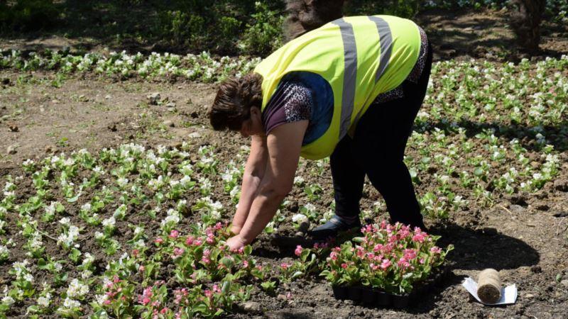 Ялта: неизвестные украли цветы с городских клумб