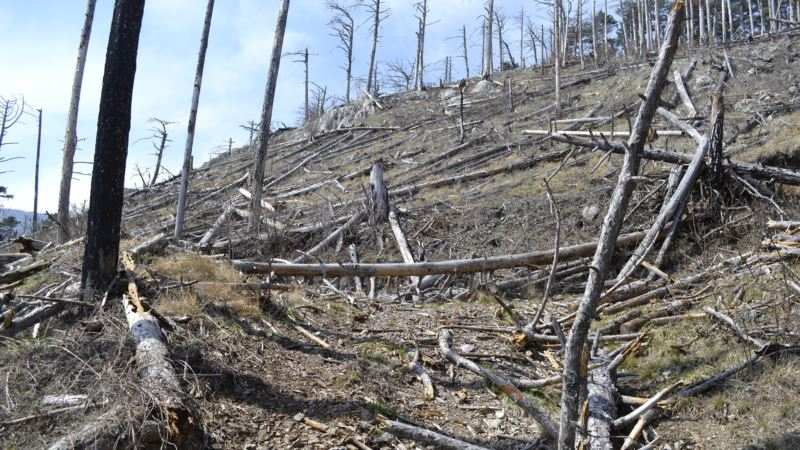 На юге Крыма ожидается чрезвычайная пожарная опасность – спасатели