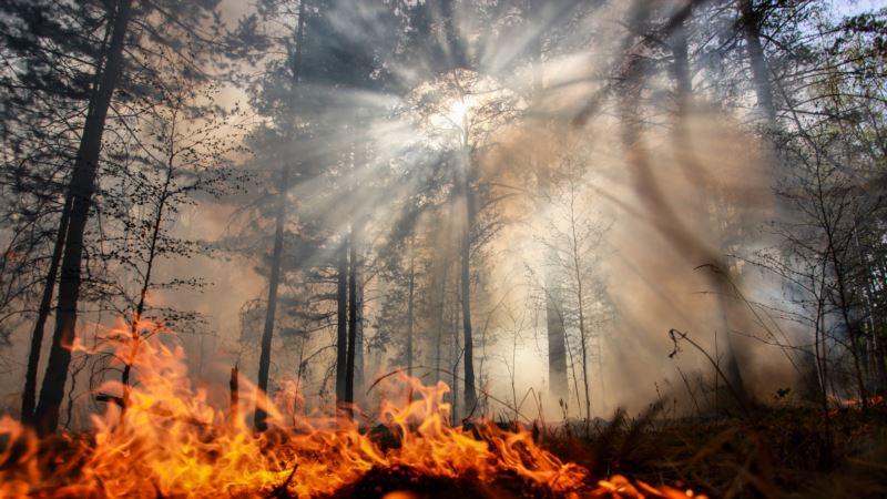 Greenpeace требует остановить «пожарную катастрофу» в Сибири