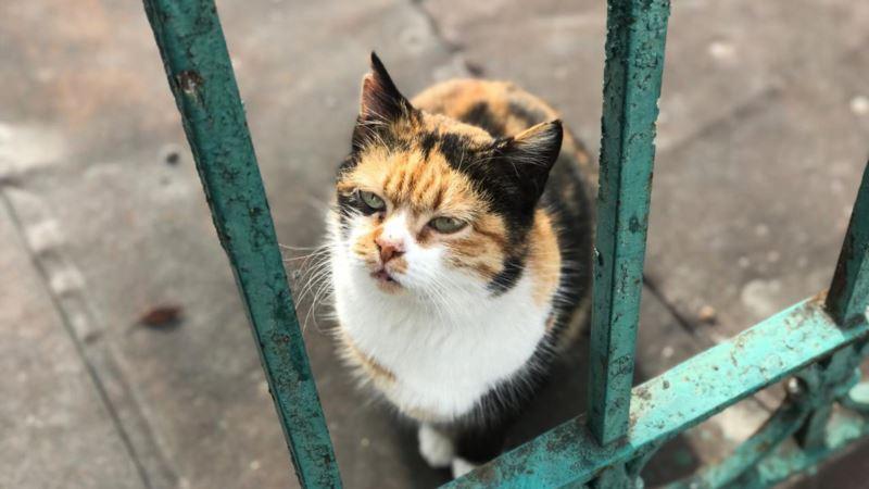 В селе на Западе Крыма ввели карантин из-за бешенства кошки