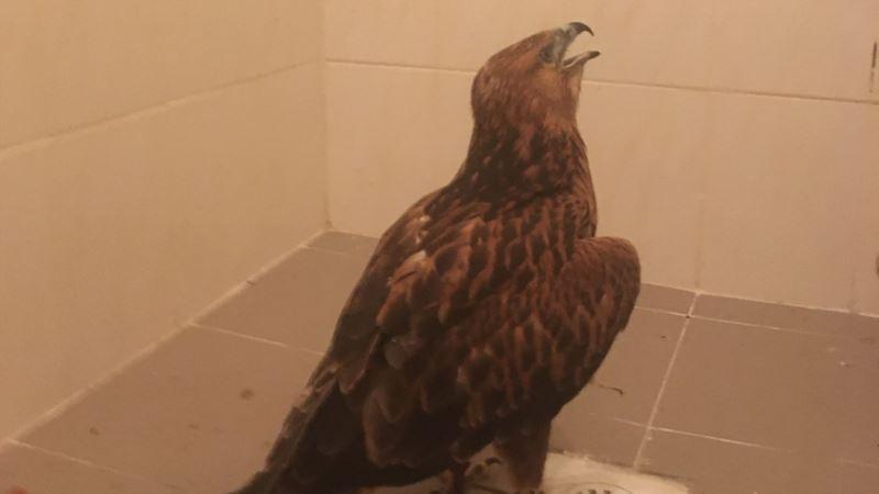 В Судаке изъяли краснокнижную дикую птицу, которую использовал фотограф – власти