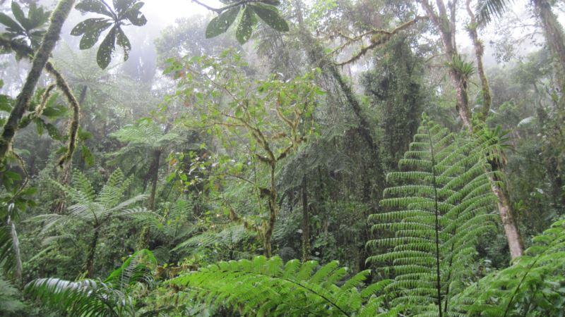В Бразилии исследователь диких племен погиб от стрелы аборигена