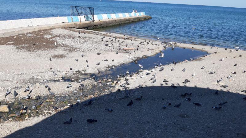 На пляже в Феодосии ручей нечистот стекает в море (+фото, видео)