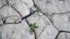 Засуха в Крыму: в России предлагают заполнить Межгорное водохранилище за счет поверхностных источников