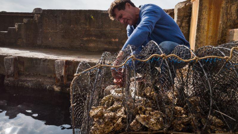 В Крыму хотят заняться переработкой морепродуктов