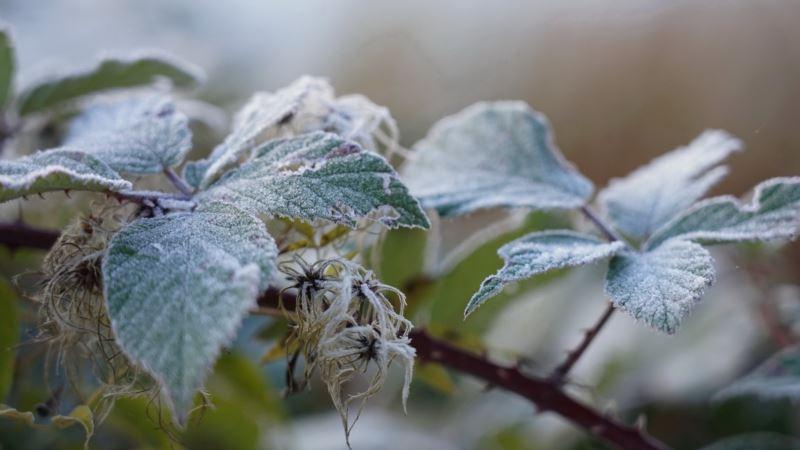 В Крыму предупреждают о заморозках в ближайшие сутки