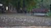 В Крыму синоптики предупреждают о дождях с грозами