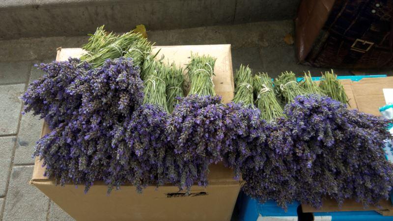 В Джанкойском районе обещают высадить 17 тысяч кустов лаванды