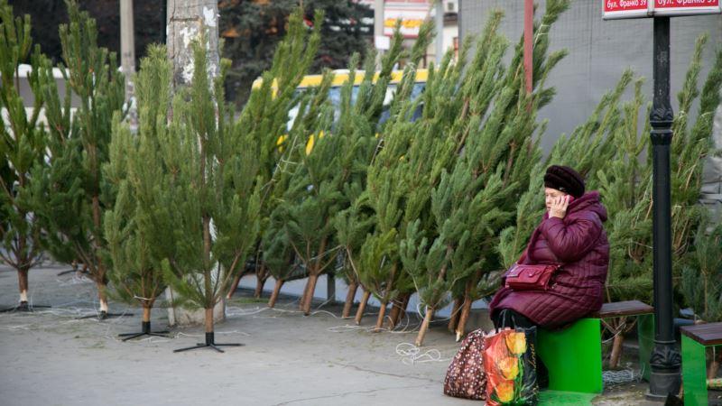 В Симферополе сообщили дату открытия елочных базаров