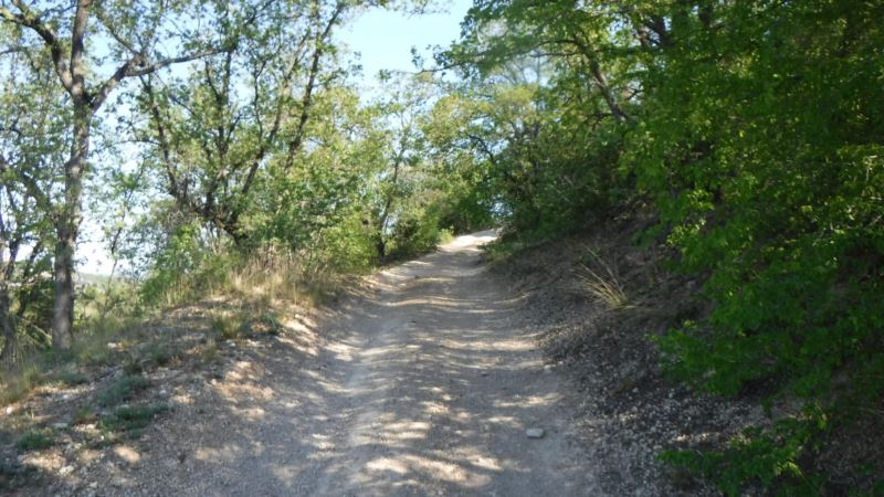 В крымском лесу потерялась женщина – спасатели