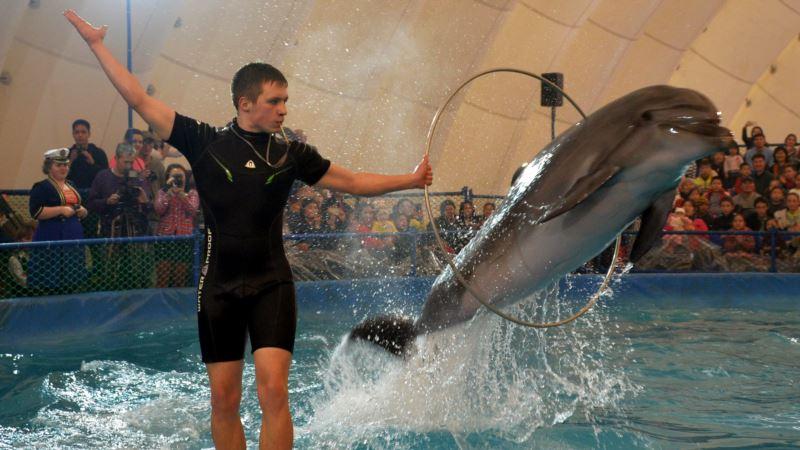 Севастополь: прокуратура проиграла суд о закрытии дельфинария в Артбухте