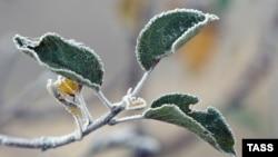 Снег отменяется: синоптик рассказал, какой будет погода в Крыму на Новый год