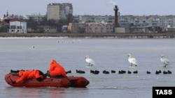 Лебеди оказались в «ледяном плену» на озере в Евпатории – спасатели (+фото)