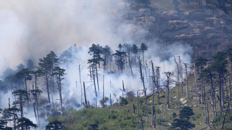 В марте в Крыму ожидается повышенный риск возникновения лесных пожаров – прогноз