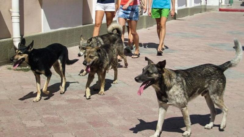 Старый Крым: полиция ищет виновных в убийстве бездомных собак – СМИ