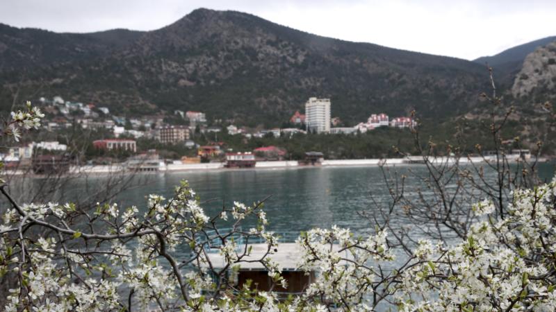 Цветет вишня, распускаются тюльпаны и ирисы: весенние пейзажи Крыма (фотогалерея)